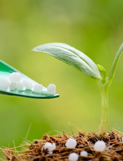 Fertilizer : Giving chemical (Urea) fertilizer to young plant over green background
